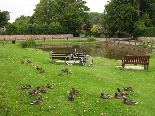 Brantingham pond