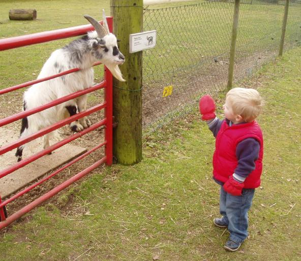 Boy meets goat at the Wetlands