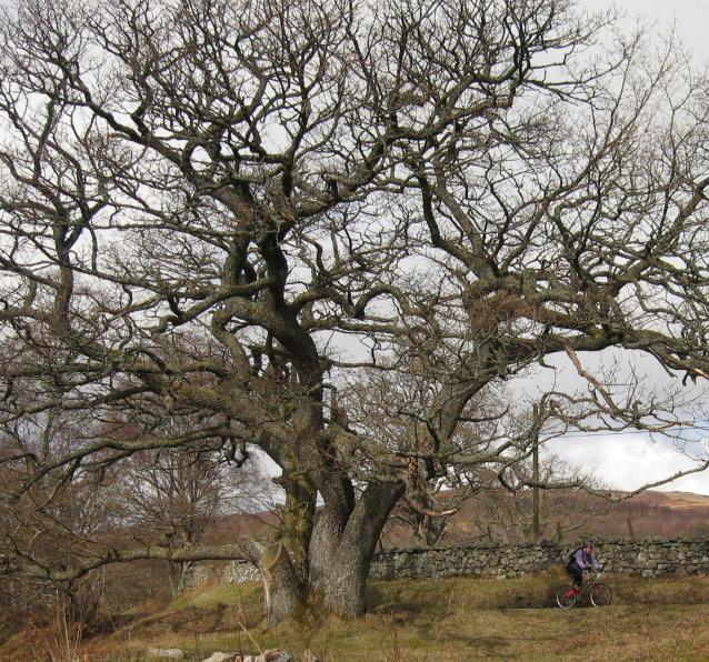 The gibbet tree, Loch Rannoch
